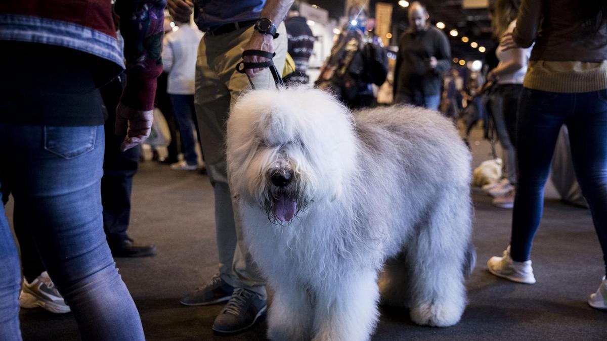 Un perro participando en una de las ediciones.
