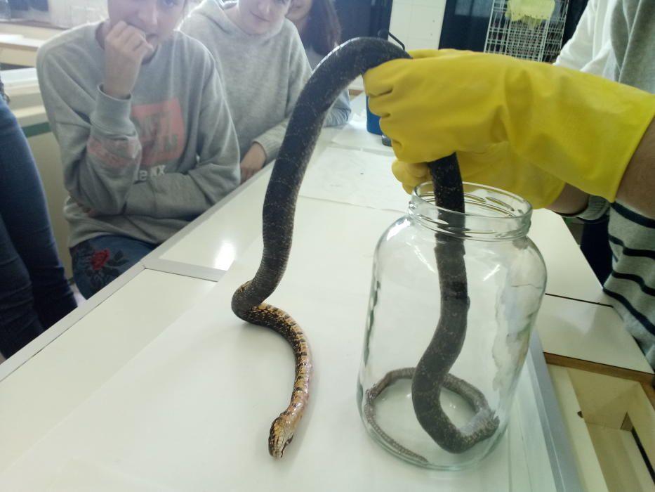 Schlangen Sineu Mallorca