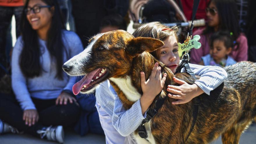 La Fundación Bioparc y la protectora AUPA organizan el 15º desfile solidario para adoptar perros abandonados
