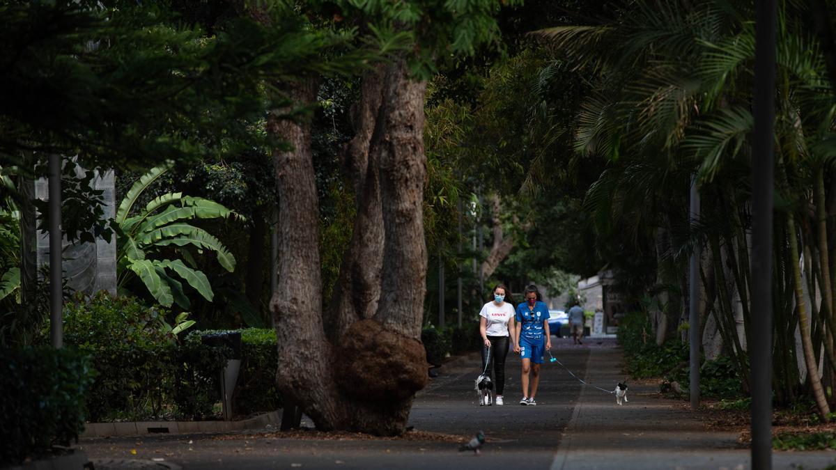 Dos chicas pasean a sus perros por Santa Cruz de Tenerife.