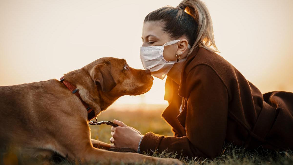 El 30 % de las mujeres víctimas de violencia machista tienen animales de compañía.