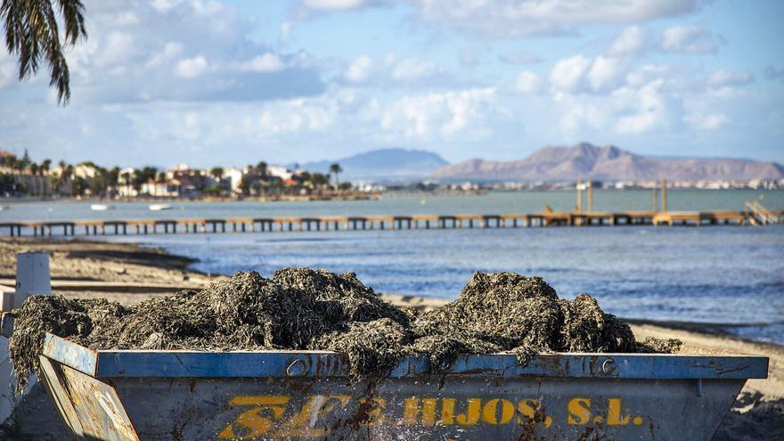 El PSOE insta al Ayuntamiento de Cartagena a que retire la biomasa acumulada en las playas
