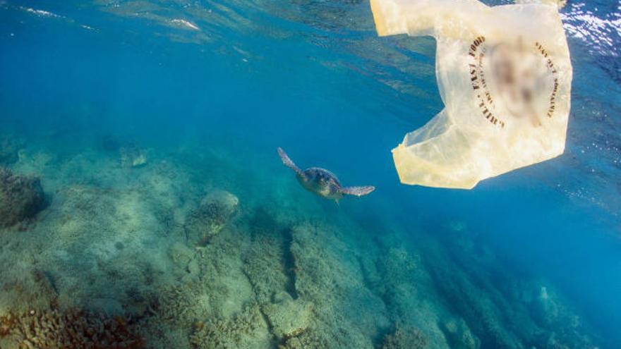 Canarias es la primera región de España que prohíbe los plásticos de un solo uso