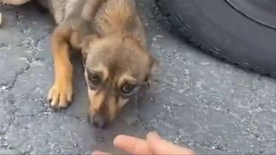 El emotivo vídeo del cambio de un perro callejero que es adoptado