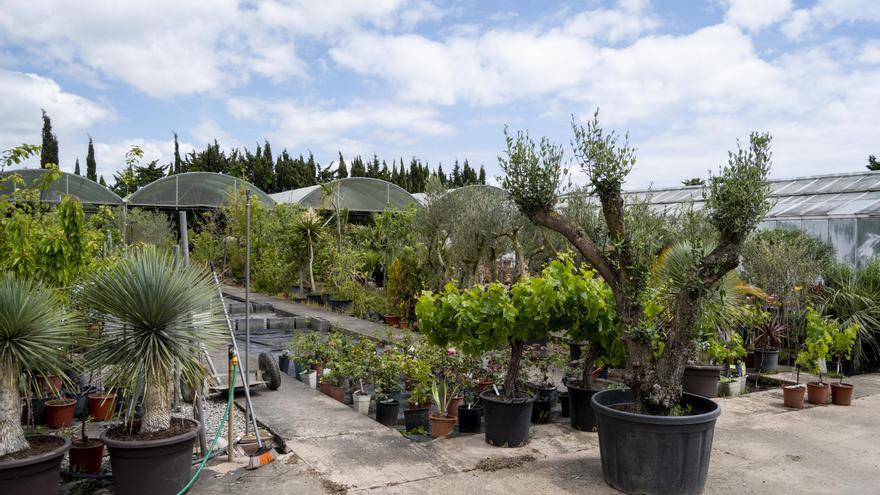 Vivers Garden Sant Pere és l'empresa de confiança per al vostre jardí o terrassa