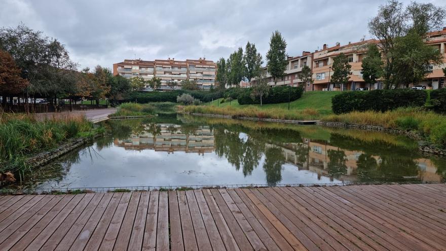 Detectat un focus de cargol poma en un llac artificial al mig d'Olesa de Montserrat