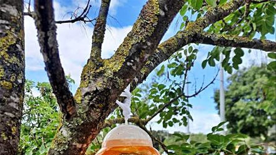 Sarrià de Ter fa una prova pilot per atrapar vespes asiàtiques i detectar si n'hi ha moltes al municipi