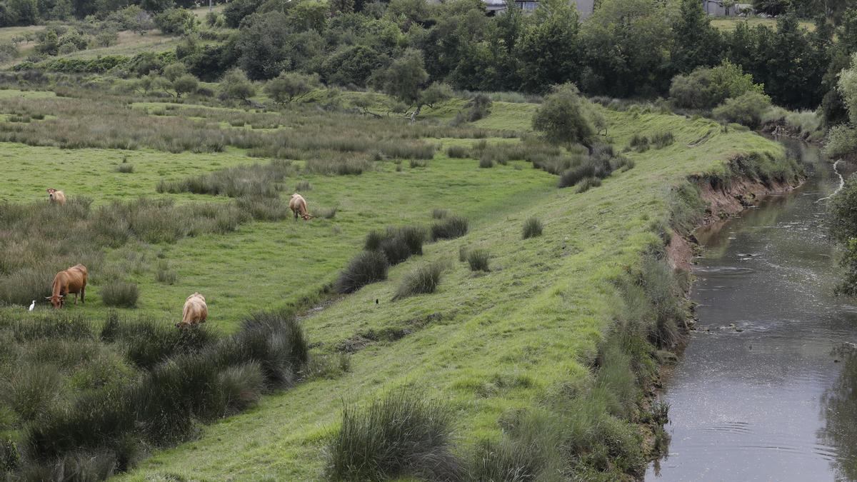 La ría de Villaviciosa se malbarata: la ruina de un entorno privilegiado asturiano