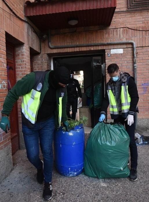 Hallan 300 plantas de marihuana en una casa del barrio del Infante de Murcia
