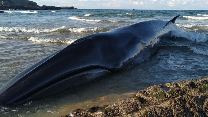 Aparece una ballena varada en Serantes