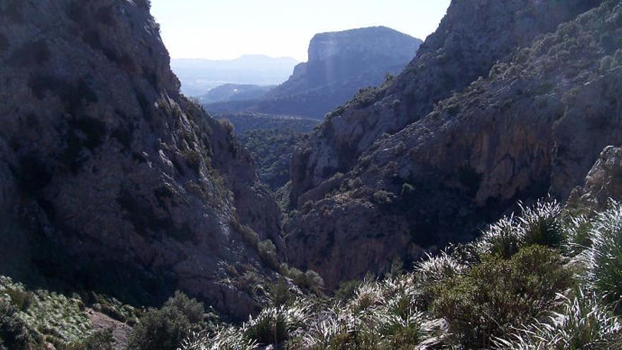Mallorcas Inselrat verbietet die Jagd auf öffentlichen Fincas