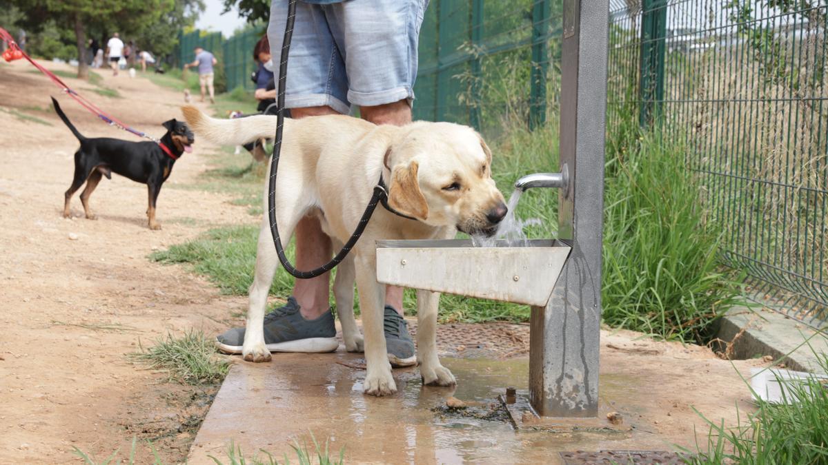 Mascota en una fuente de Paterna