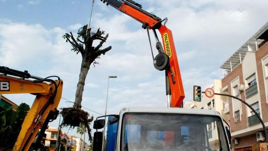 Los beneficios que perdemos cuando se talan árboles porque 'molestan'