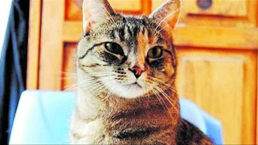 Entre mi gato y el arenero hay algo personal