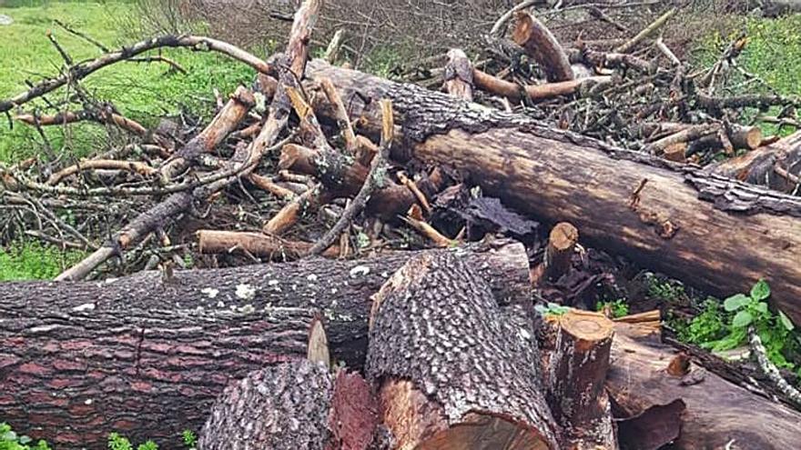 Arrecian las quejas por vertederos en los montes, talas y árboles envenenados