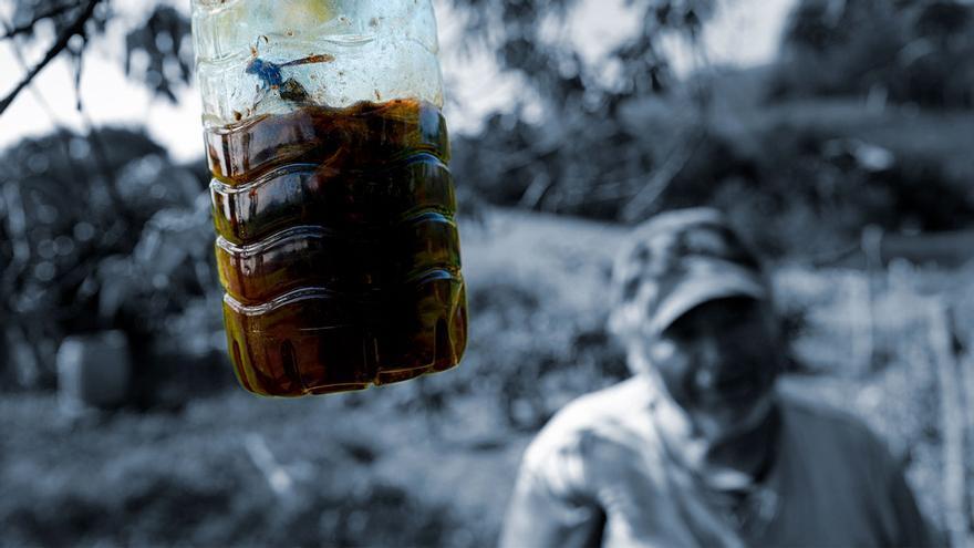 """La Junta aprueba declarar """"plaga"""" la velutina y pide un plan integral de erradicación"""