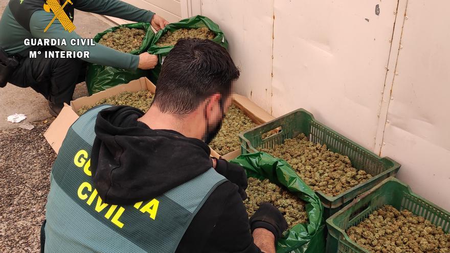 VÍDEO | La Guardia Civil desarticula, en Argujillo, la mayor plantación de marihuana descubierta en la provincia de Zamora