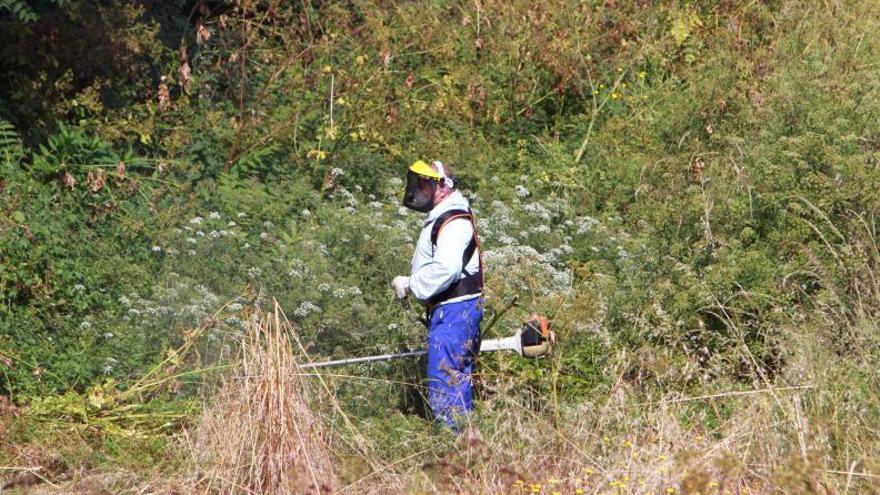 La Xunta revisa los 50 metros de distancia de las franjas contra los incendios