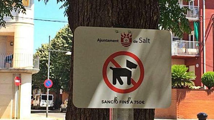 Salt descarta retirar el veto als gossos en tretze espais públics