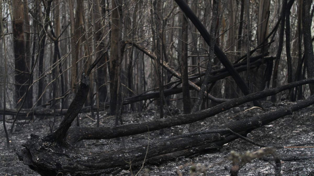 Un área forestal quemada.