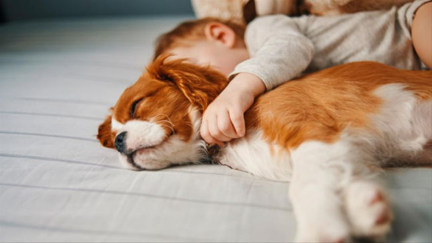 Cómo hacer que el perro acepte al bebé en la familia