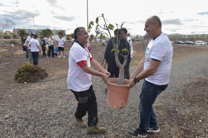 24-11-2019 TELDE. Plantación para nuevo jardín en un terreno junto a la rotonda de la playa de Melenara  | 24/11/2019 | Fotógrafo: Andrés Cruz