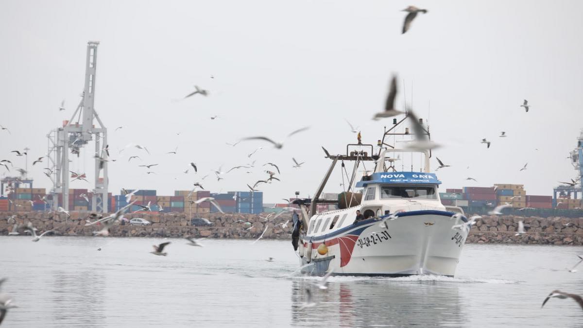 La pesca de Castellón da la voz de alarma ante una pésima campaña