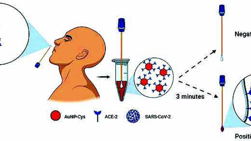 De la Fuente crea un test COVID de color como los del embarazo