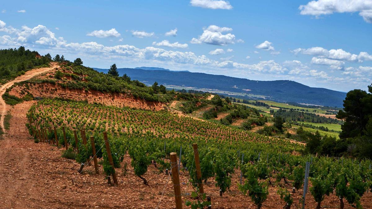 Risky Grapes utiliza variedades autóctonas como la Bobal y la Merseguera para elaborar su línea de vinos.