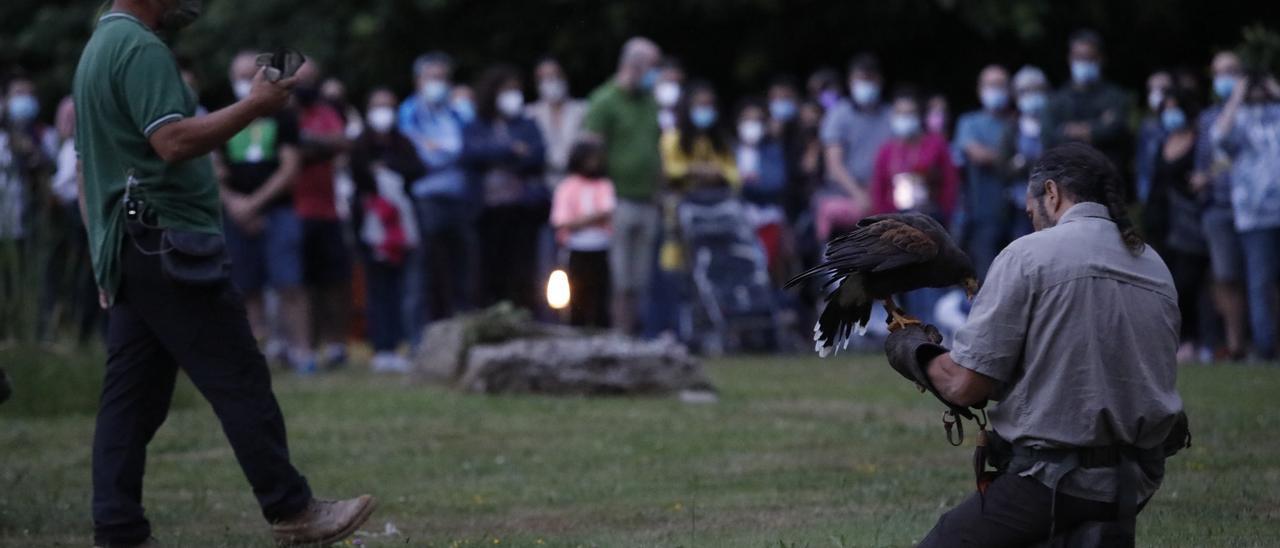 Quince aves rapaces para un espectáculo de altos vuelos en el Botánico