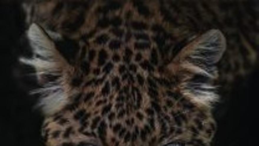 Largometraje documental 'Felinos'