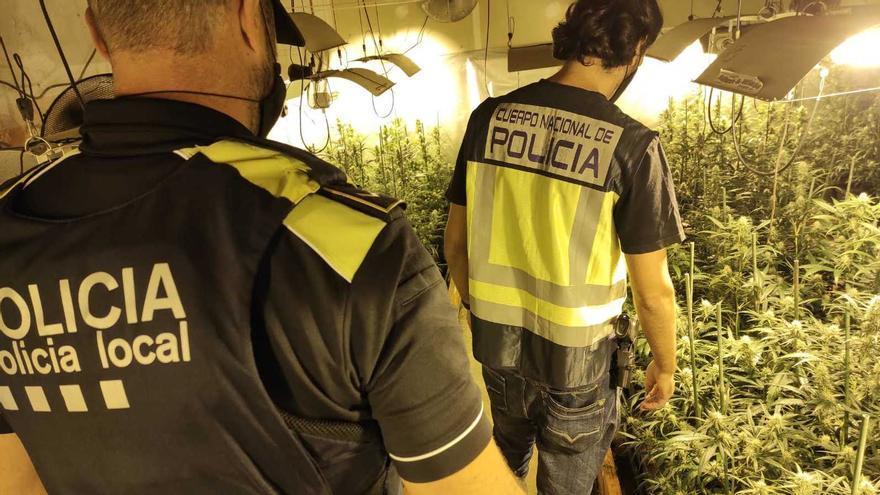 Localitzen 660 plantes de marihuana en una casa a Llagostera