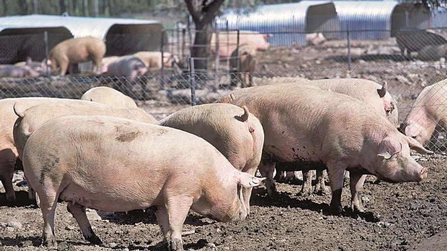 El sector ganadero reivindica su  papel de protector del medio rural