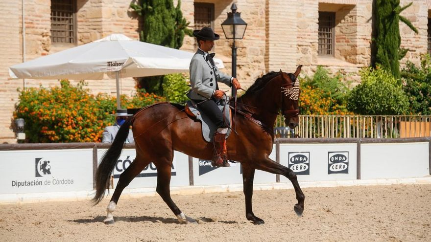 Comienza la última actividad de Cabalcor 2020, el Campeonato de Andalucía de Alta Escuela