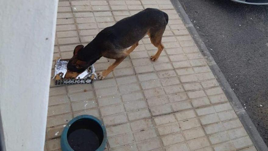 Convocada una gran manifestación en Canarias contra el maltrato animal