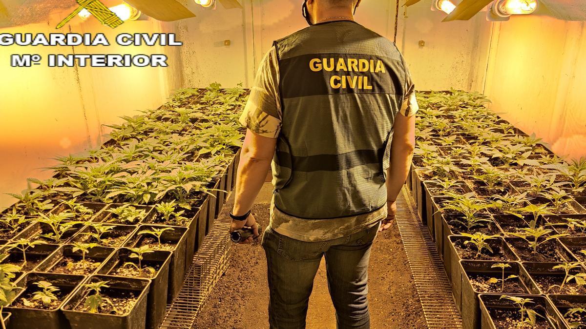 Agrede a dos guardias civiles cuando para evitar una inspección en su plantación de marihuana de Montesa
