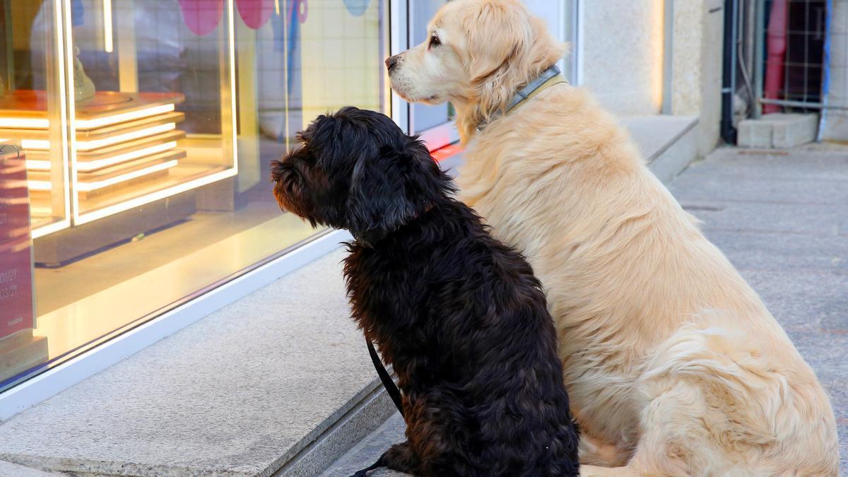 Dos perros esperan a sus dueños en el entorno de Príncipe.
