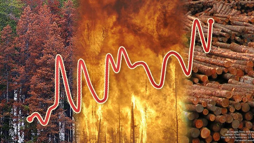 Un estudio alerta de que los bosques europeos son cada vez más vulnerables a los vientos, incendios y plagas de insectos
