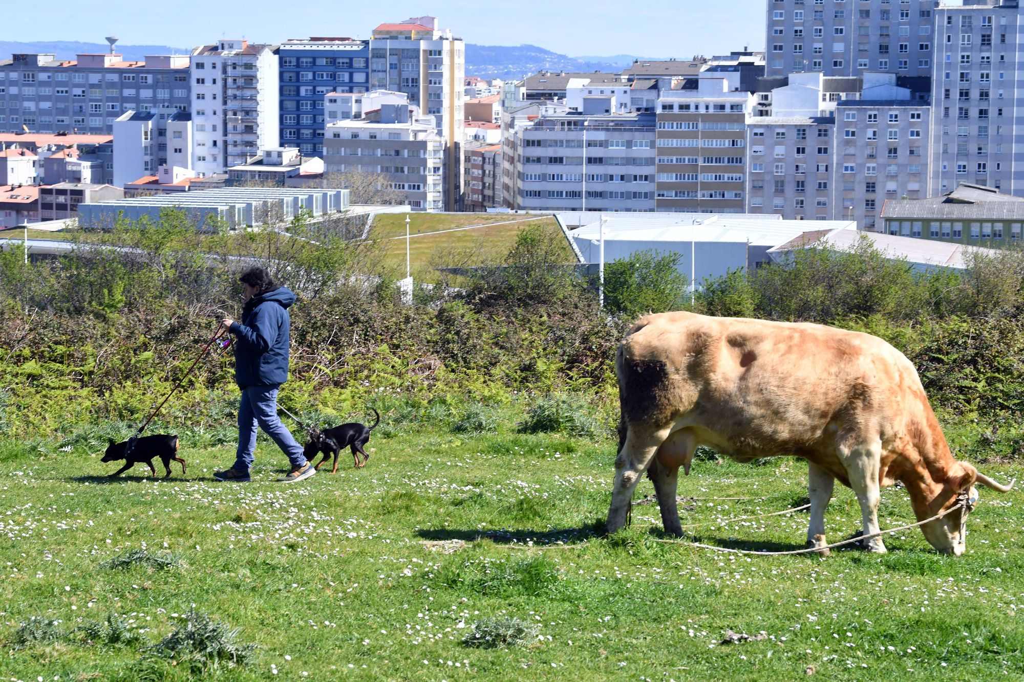 Luis Maceira y sus animales