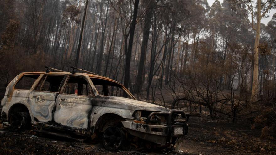 Els incendis forestals han matat més de 1.000 milions d'animals a Austràlia