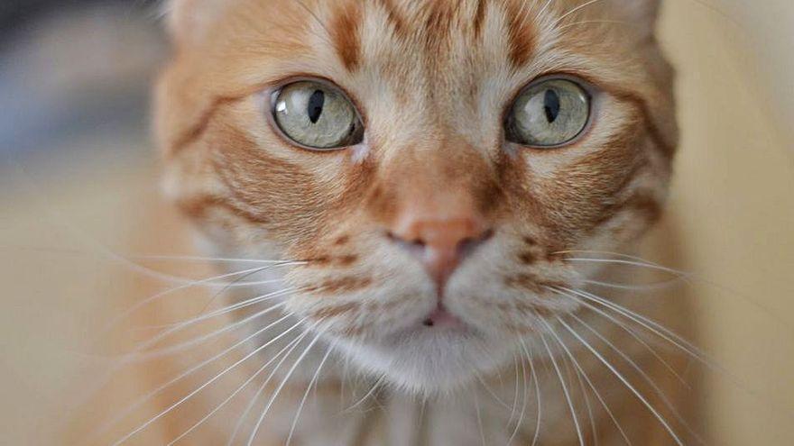 Las cosas claras: tener un gato cuesta dinero