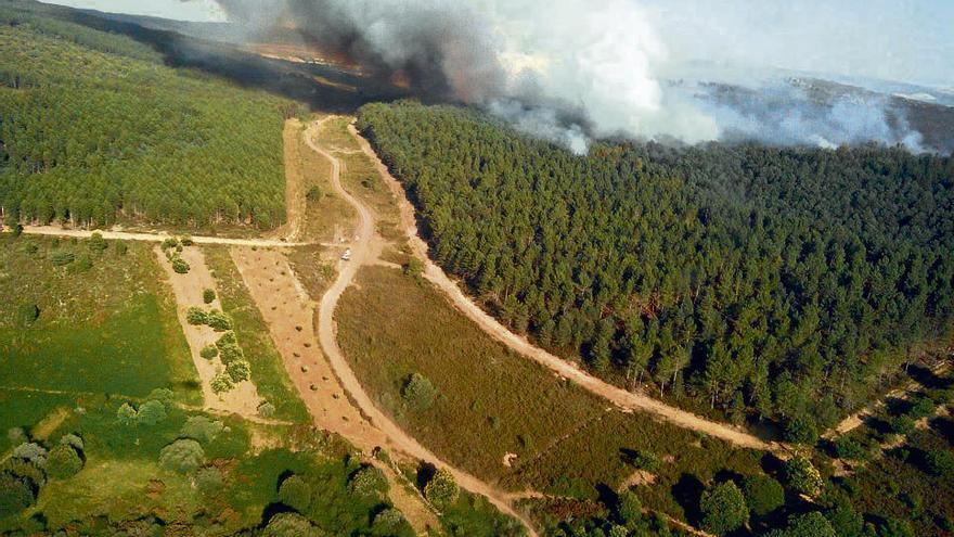 Vista aérea del pinar incendiado ayer en Latedo.