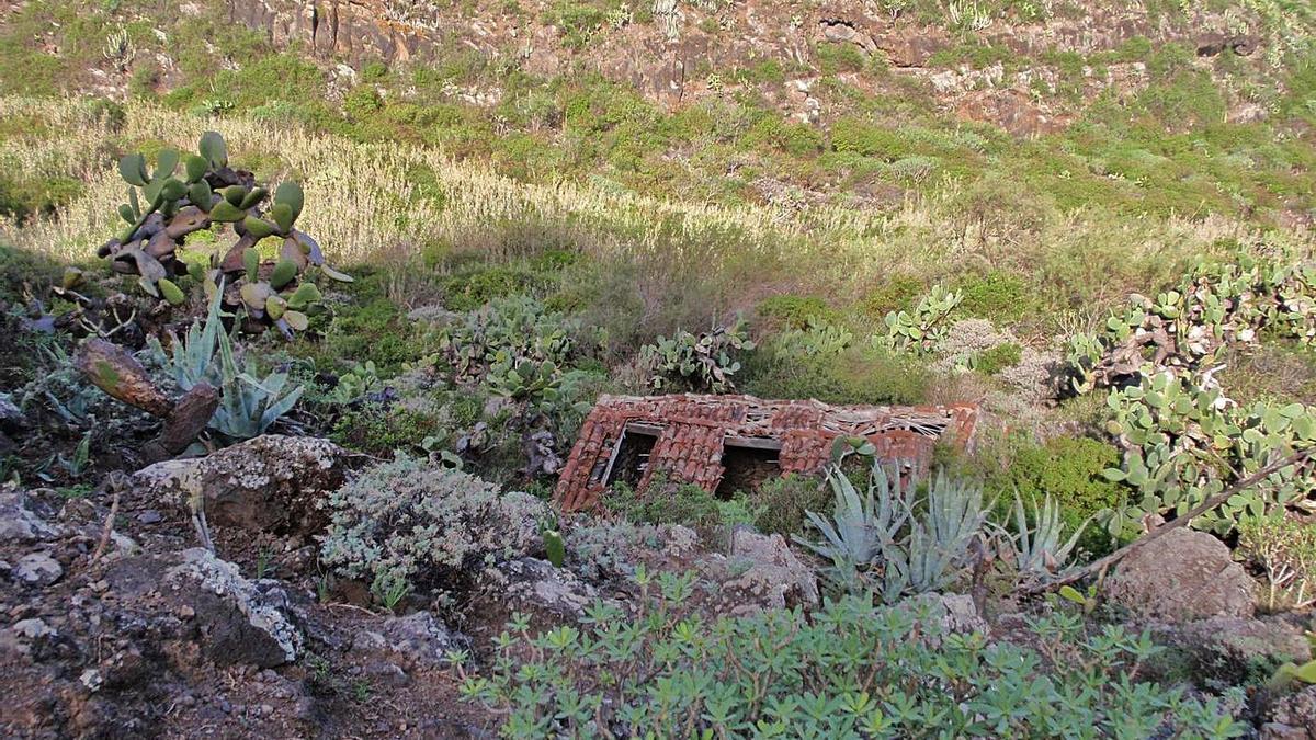 Estampa del sendero de Buenavista al barranco de Bujamé. | | E.D.