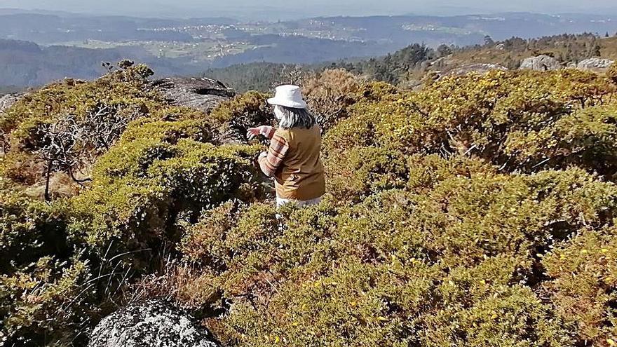 Patrimonio autorizará la prospección para buscar los restos del Castillo de Teodomiro