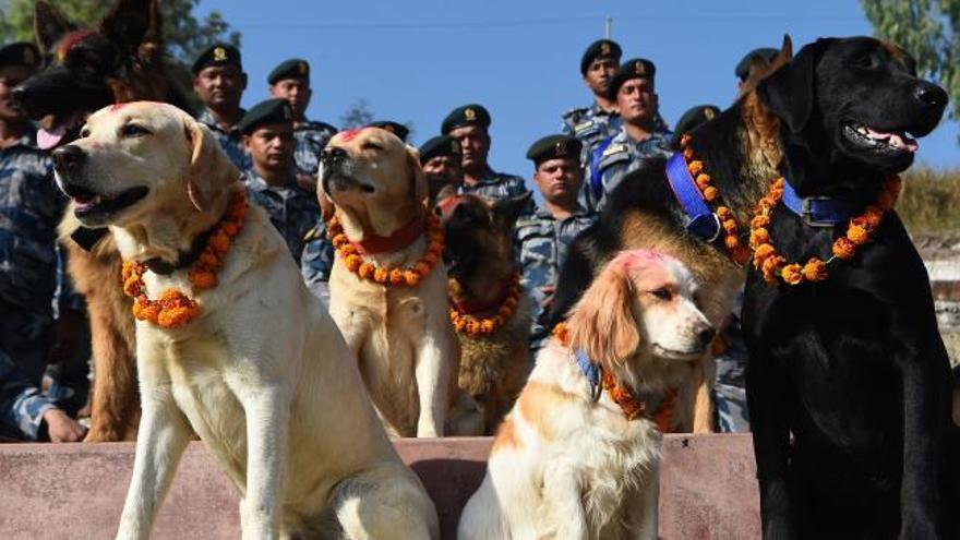 Nepal adora a los perros con guirnaldas en la fiesta de Tihar