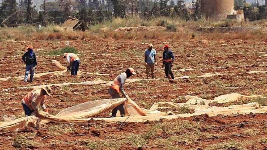 Ecologistas vincula la agricultura intensiva al aumento de escorrentías
