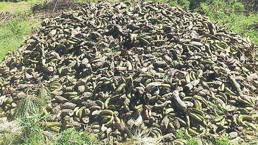 El TSJC declara válida la tasa por tratar residuos no peligrosos en La Palma