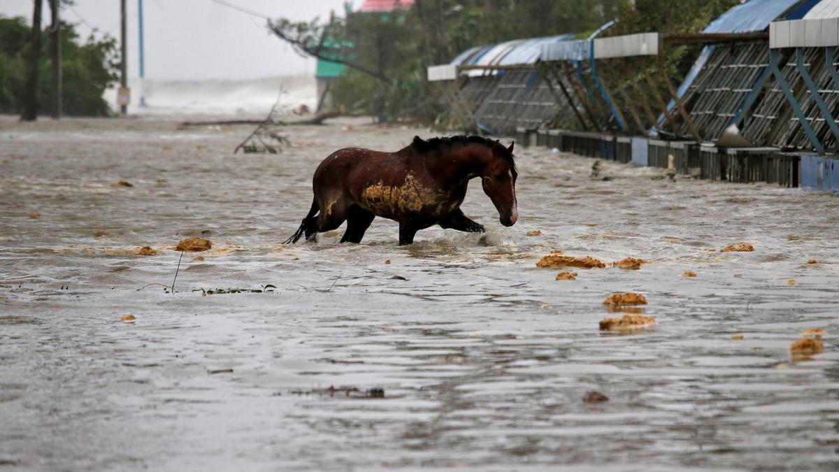 Un caballo cruza una carretera anegada de agua tras las lluvias previas al ciclón Yaas.