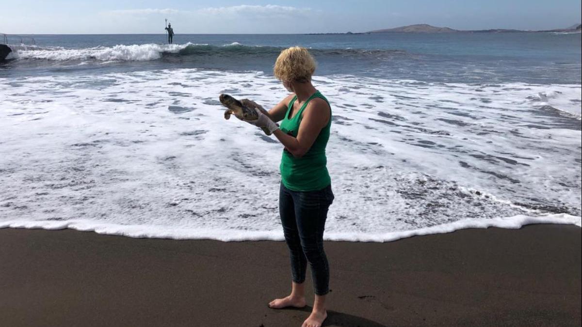 La concejala de Bienestar Animal de Telde, Auri Saavedra, devuelve una tortuga al océano en esta imagen de archivo