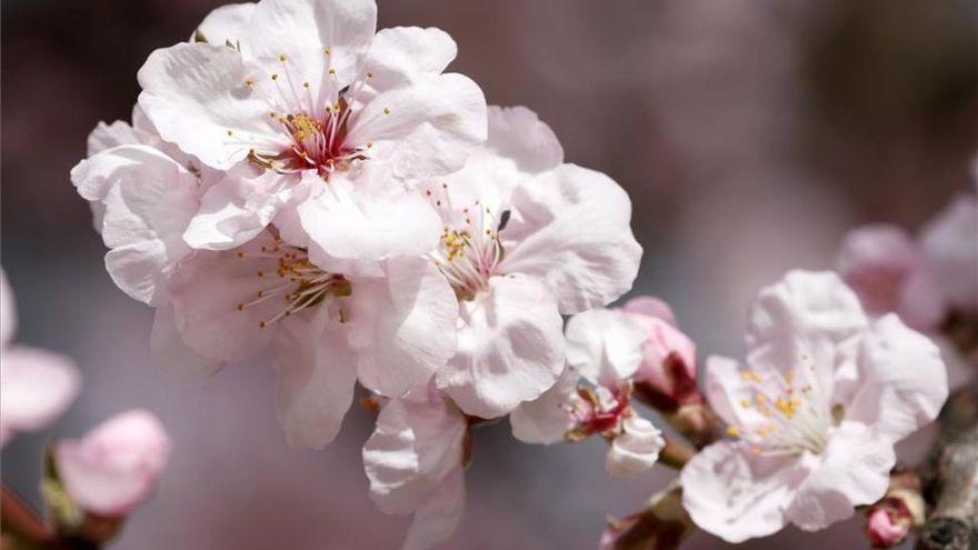 Extremadura figura entre las comunidades autónomas con mayor nivel de polen esta primavera
